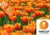 01.03.2021 - HẠN CHÓT NỘP HỒ SƠ ĐỢT 1 CHO HỌC BỔNG ORANGE TULIP SCHOLARSHIP HÀ LAN (OTS)